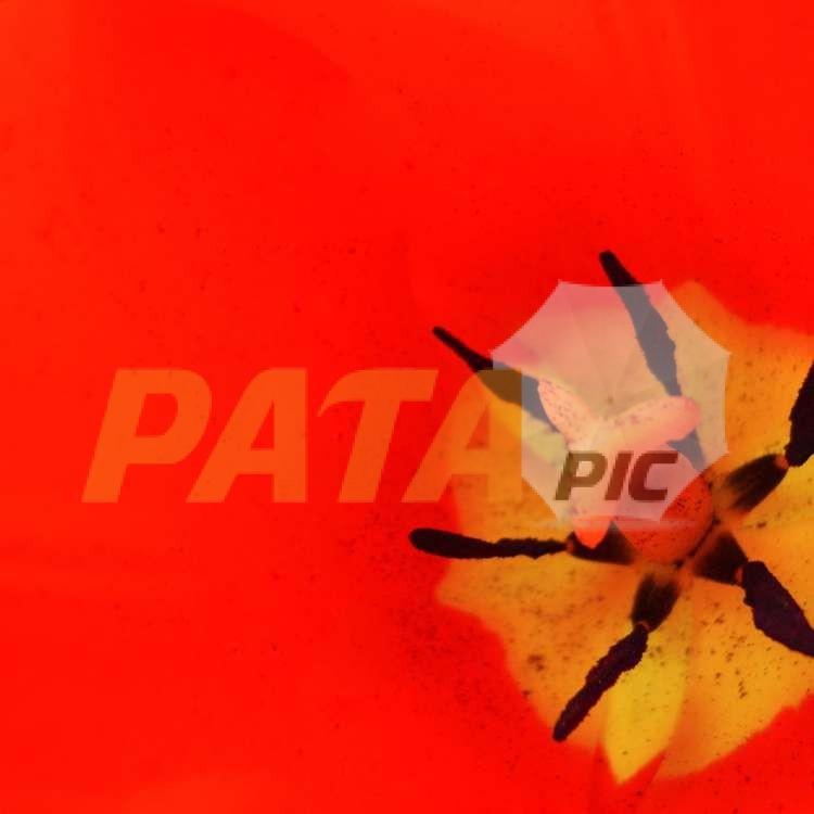 2009FREEDSC02554www.patapic