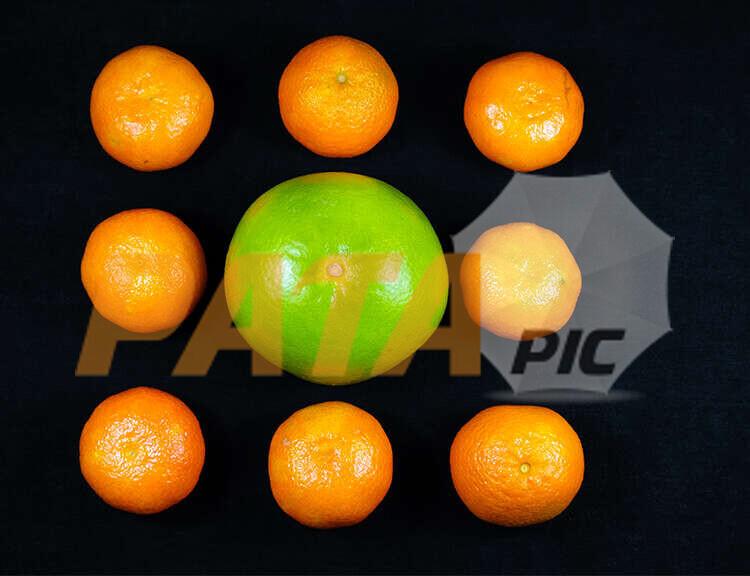 NineTangerines&Pomelowww.patapic.com